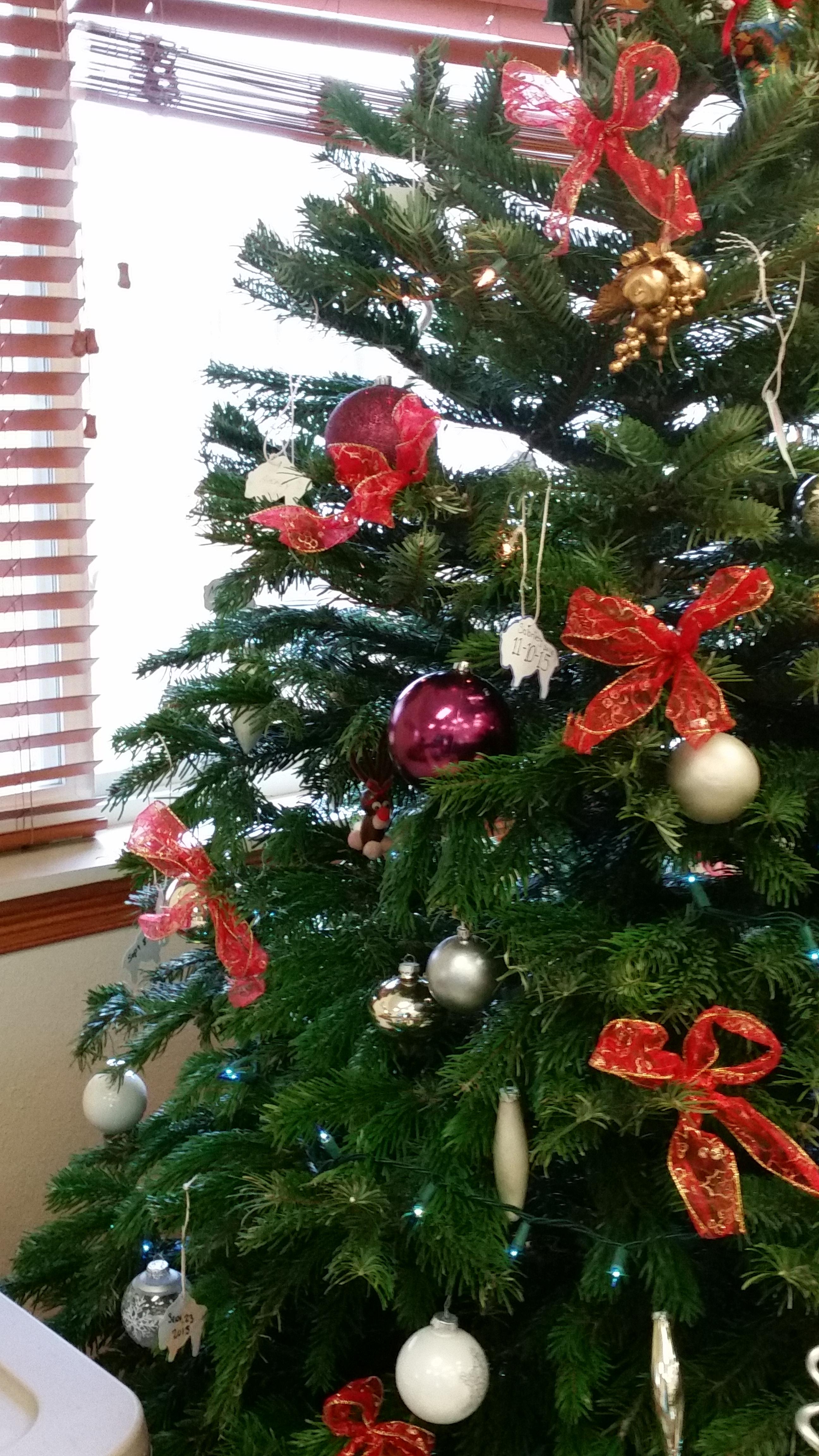 christmas tree of hope  u2013 gallery
